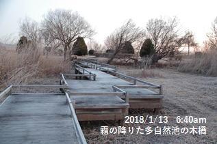 霜の降りた多自然池の木橋