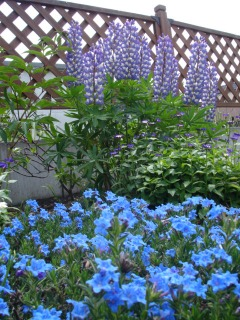 ブルーの季節