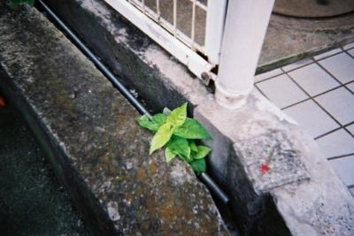 雑草 ジュースカメラ