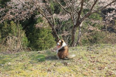sakurasaku04.JPG