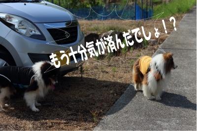 himawari0.jpg
