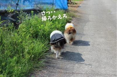 himawari08.jpg