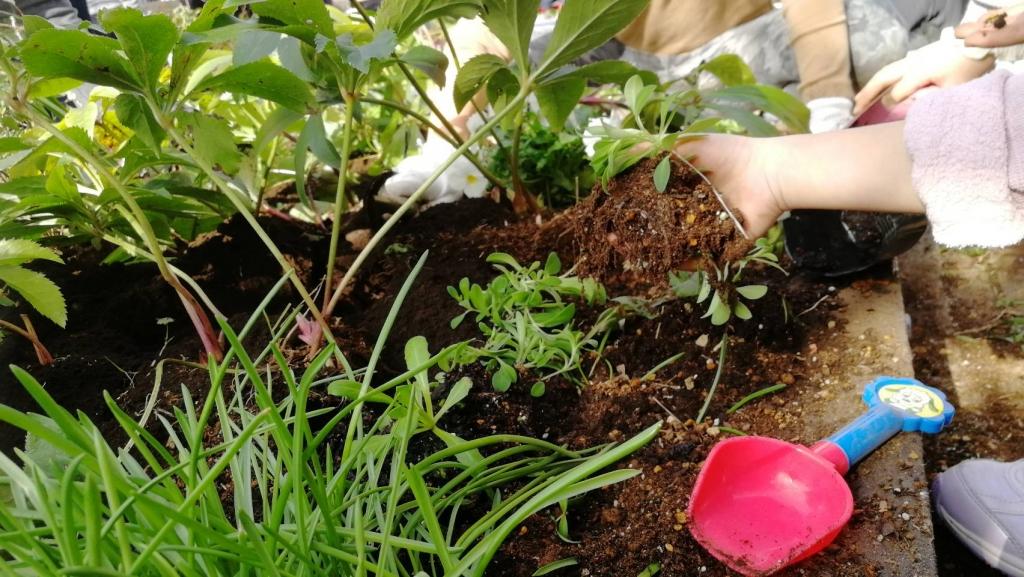 苗植えの様子1