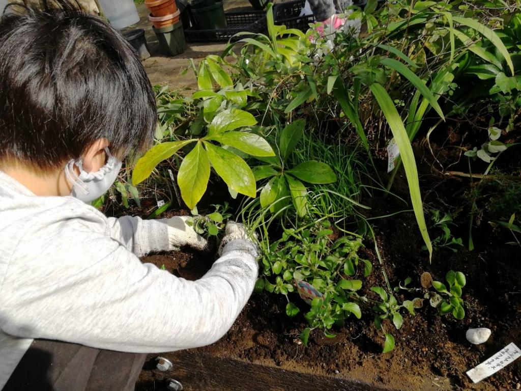 苗植えの様子2