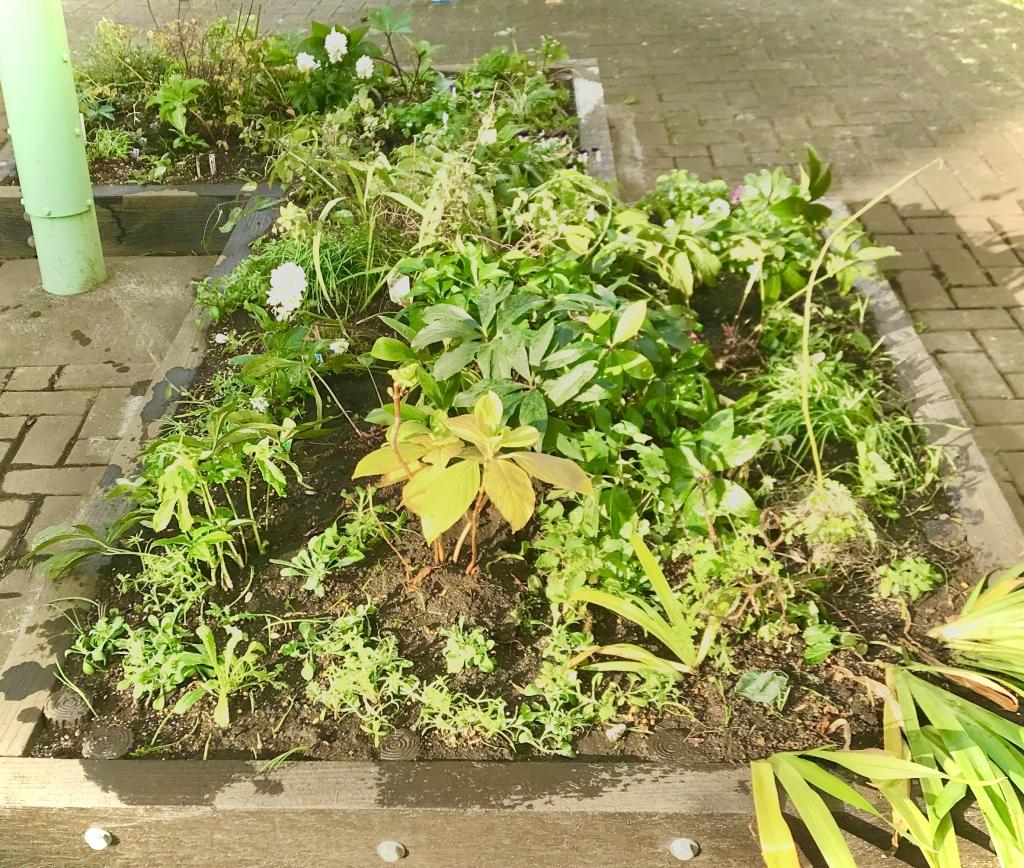 苗植え後の花壇