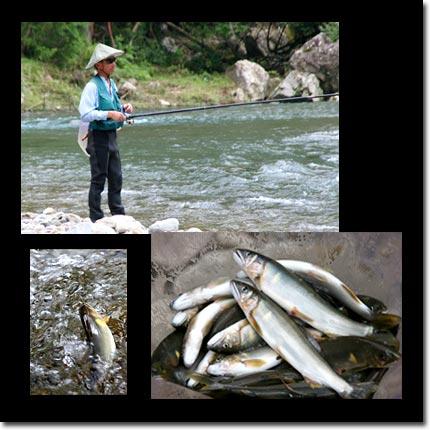 十津川清流鮎釣り