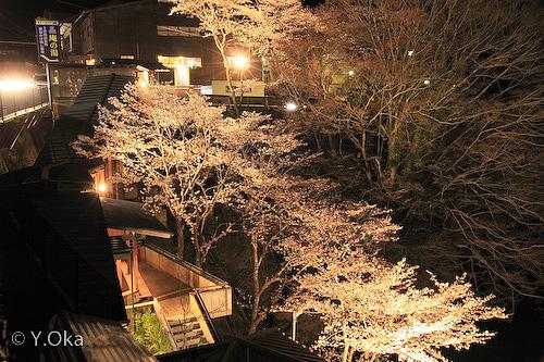 庵の湯夜桜ライトアップ