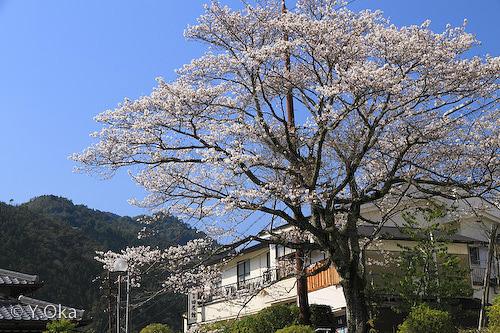 十津川温泉の桜田花館