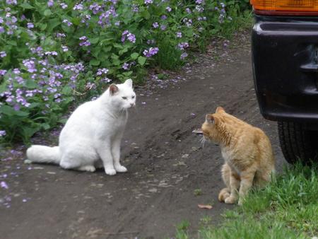 野良猫さんたち