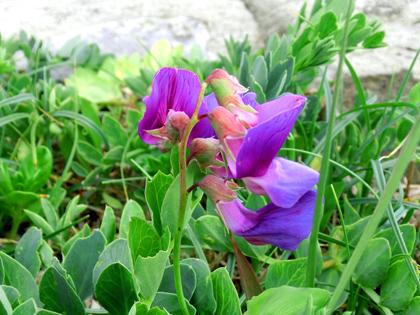 南房総の花