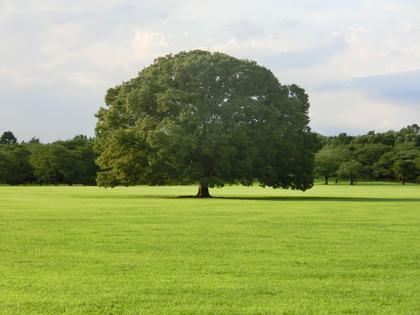 昭和記念公園の象徴の木