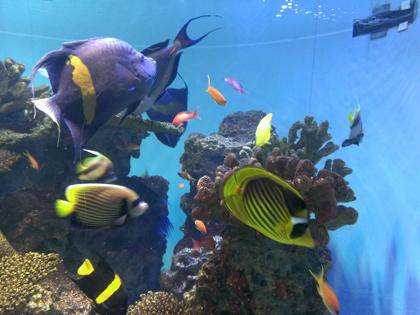葛西臨海公園の水族館