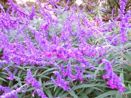 新宿中央公園の花