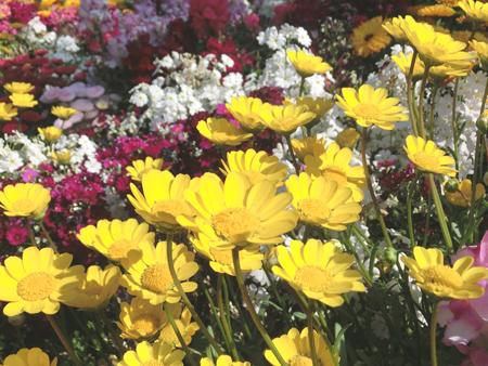 せせらぎの里公苑の花壇