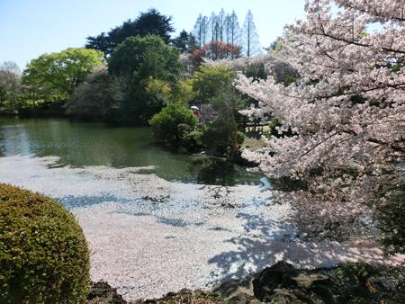 新宿御苑の桜2018