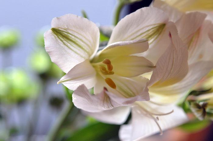 14.0531.flower1.jpg