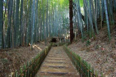 竹柵が続いています