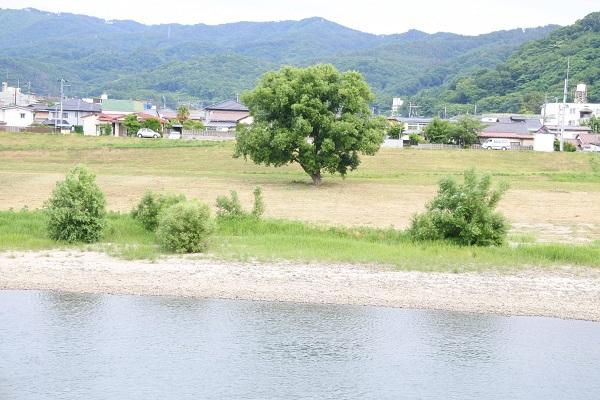 隈岬4.JPG