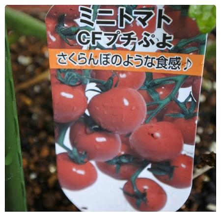 ミニトマト1.jpg