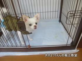 シフォン (1).JPG