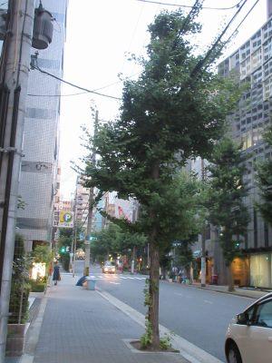 街路樹と電線 くらしかる