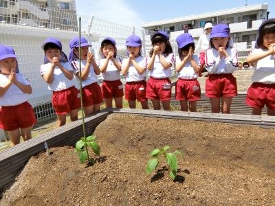 3.種と苗を植えた後は、水をあげて…みんなで「大きくなりますように?」とお願いしました!.JPG