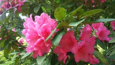 三室戸寺の花3.JPG