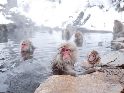 地獄谷温泉のサル.jpg