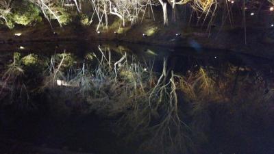 京都桜2.jpg