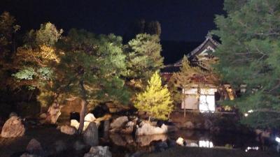 京都桜4.jpg