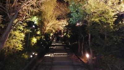 京都桜7.jpg