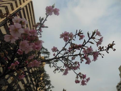 桜ですよね・・梅かな?