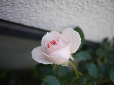 bararoku2012 (7).JPG