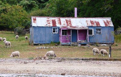ニュージーランドの典型的なバッチのある風景<br />