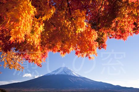 椛と富士山