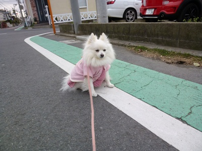 しゃむい時は、歩かないでちゅ