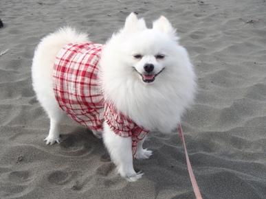おしゅな浜に立っているでちゅ