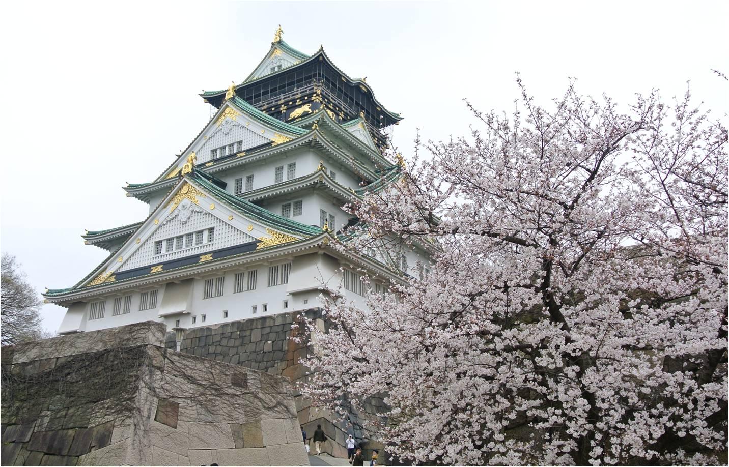 桜と大阪城天守