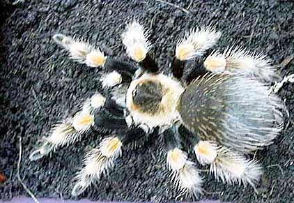 きれいな蜘蛛