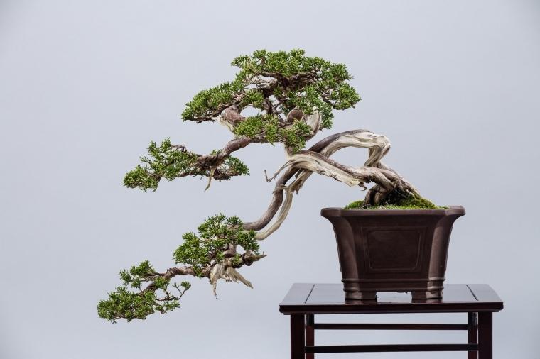 bonsai01.jpg