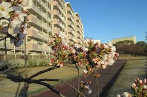 桜保田ヶ池