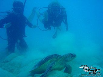 Congratulations! PADI Open water divers!