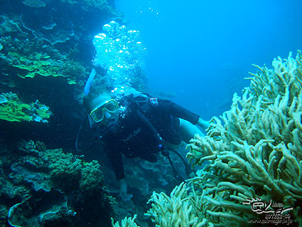 Diving at Great Barrier Reef.