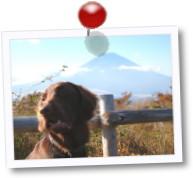 秋のmt.Fujiとyuzu