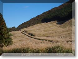 仙石原のすすき野