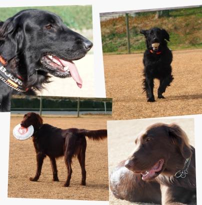 3 Ms dog run コラージュ.jpg