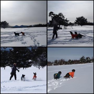 29雪遊びan&yu&paコラージュ.jpg