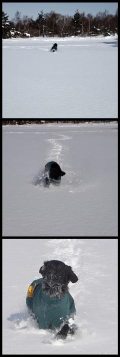129雪遊びanzuコラージュ.jpg