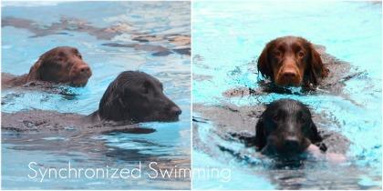 0601 woof pool.jpg