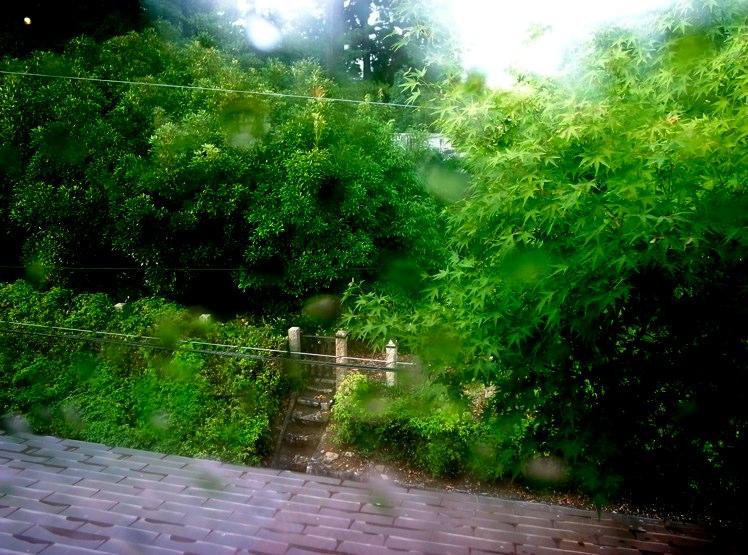 雨上がりの吉田山